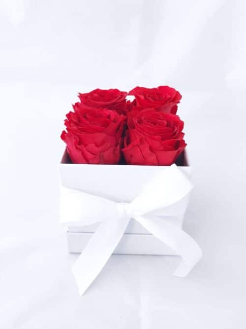 preserved roses in white gift box