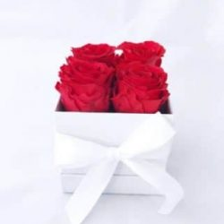 red preserved roses in white gift box