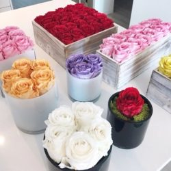 Preserved Roses Luxury Gift Boxes