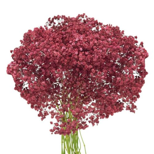 red baby's breath