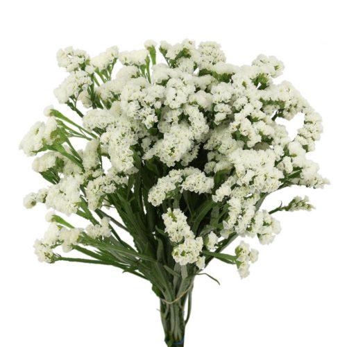 white statice flower