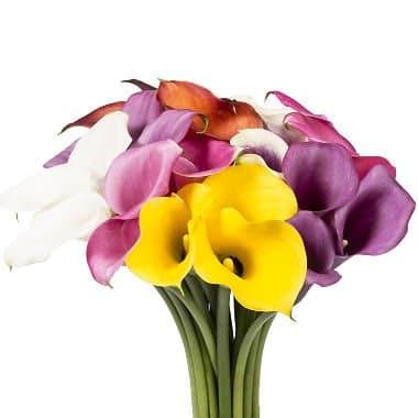 calla-lily-flower