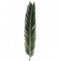 sago-palm