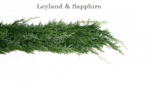 Leyland-Sapphire-wedding-garland