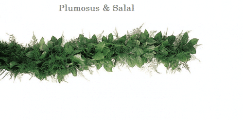 Plumosus-Salal-wedding-garland