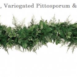 Plumosus-Variegated-Pittosporum-Salal-wedding-garland