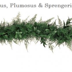 Ruscus-Plumosus-Sprengeri-wedding-garland