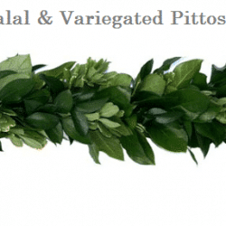 Ruscus-Salal-variegated-pittosporum-wedding-garland