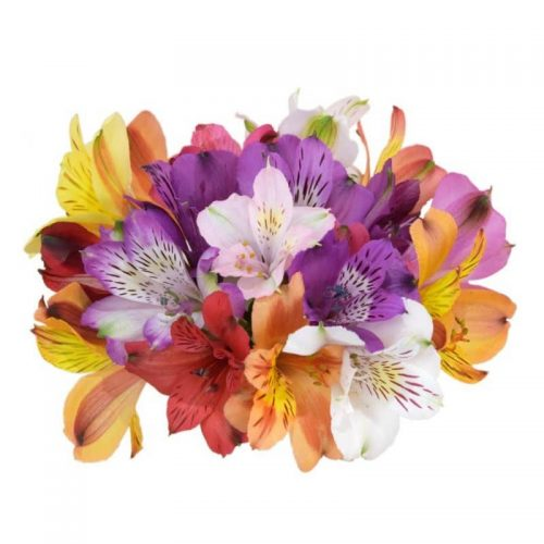 alstroemeria-flower-assorted