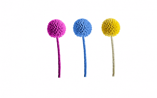 billy-ball-flower