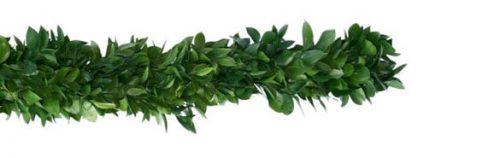 ruscus-garland