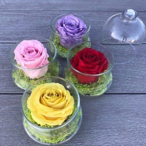 preserve-rose