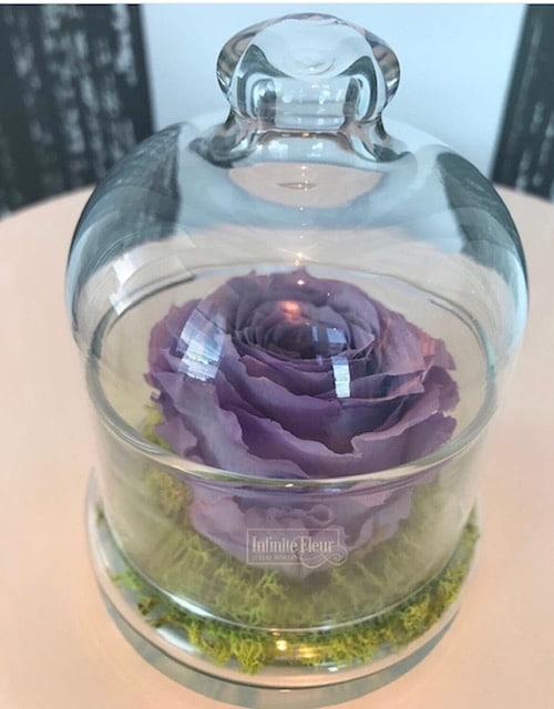 lavender-preserved-rose