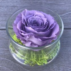 lavender-preserved-rose