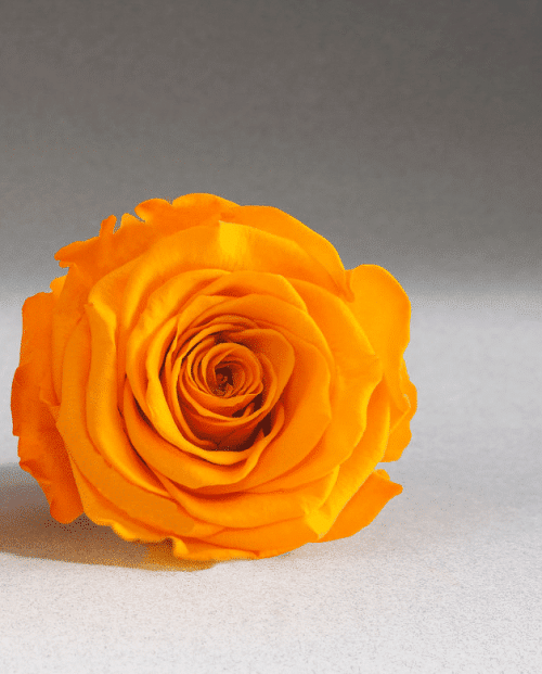 orange-preserved-rose