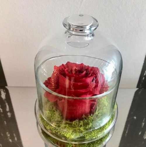 red-preserved-rose-glass