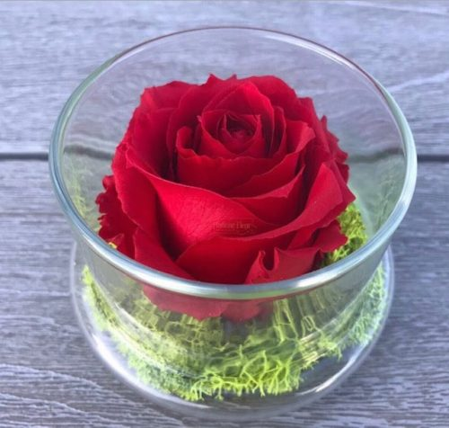 red-preserved-rose-glass-dome