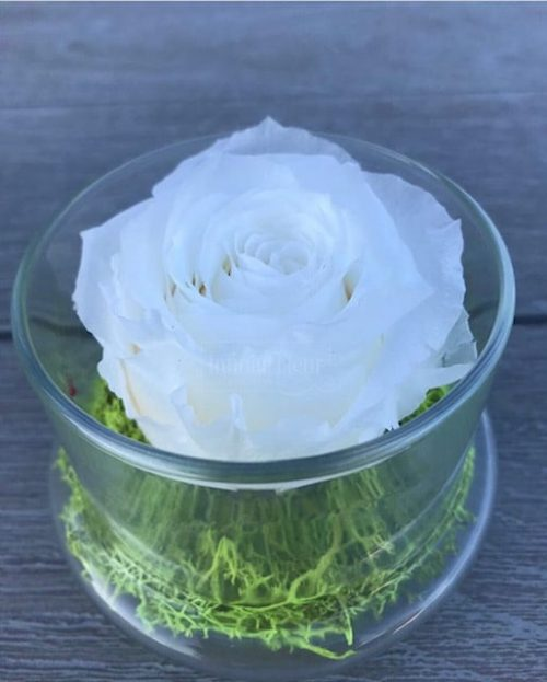 white-preserved-rose