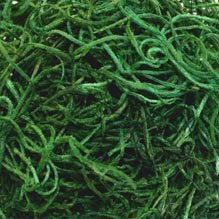 spanish-moss-forest-green