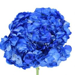 Blue-Tinted-Hydrangeas