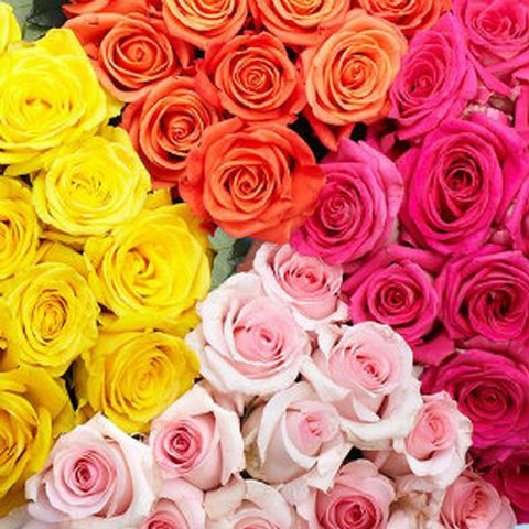 assorted-roses