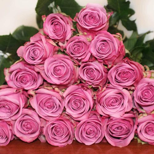 lavender-roses