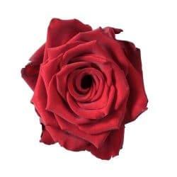 explorer-red-rose-top-view