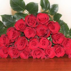 freedom-red-roses