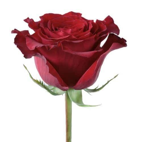 hearts-red-rose-side-view