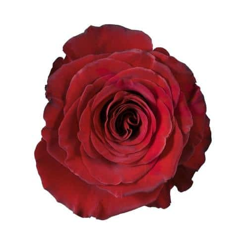 hearts-red-rose-top-view