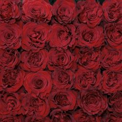 hearts-red-roses-top-views