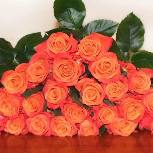 Orange-Roes