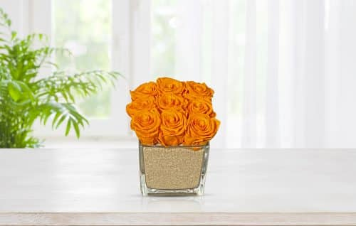 preserved roses in glass vase