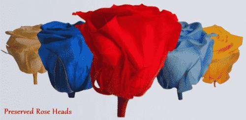 Preserved-Rose-blooms