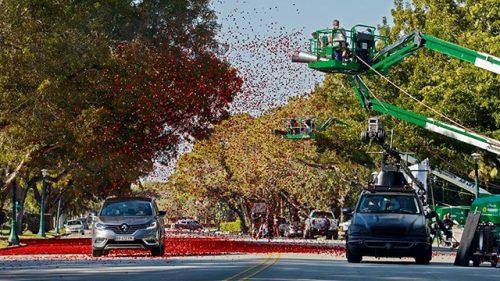 red-rose-petals-car-commercial