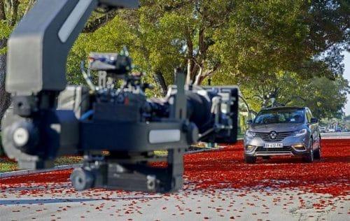 car-rose petals