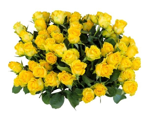 yellow-roses-bulk
