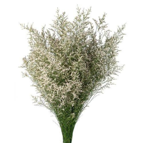 white limonium